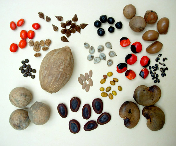 Seed dispersal different seeds